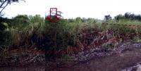 ที่ดินหลุดจำนอง ธ.ธนาคารอาคารสงเคราะห์ หนองสามวัง หนองเสือ ปทุมธานี